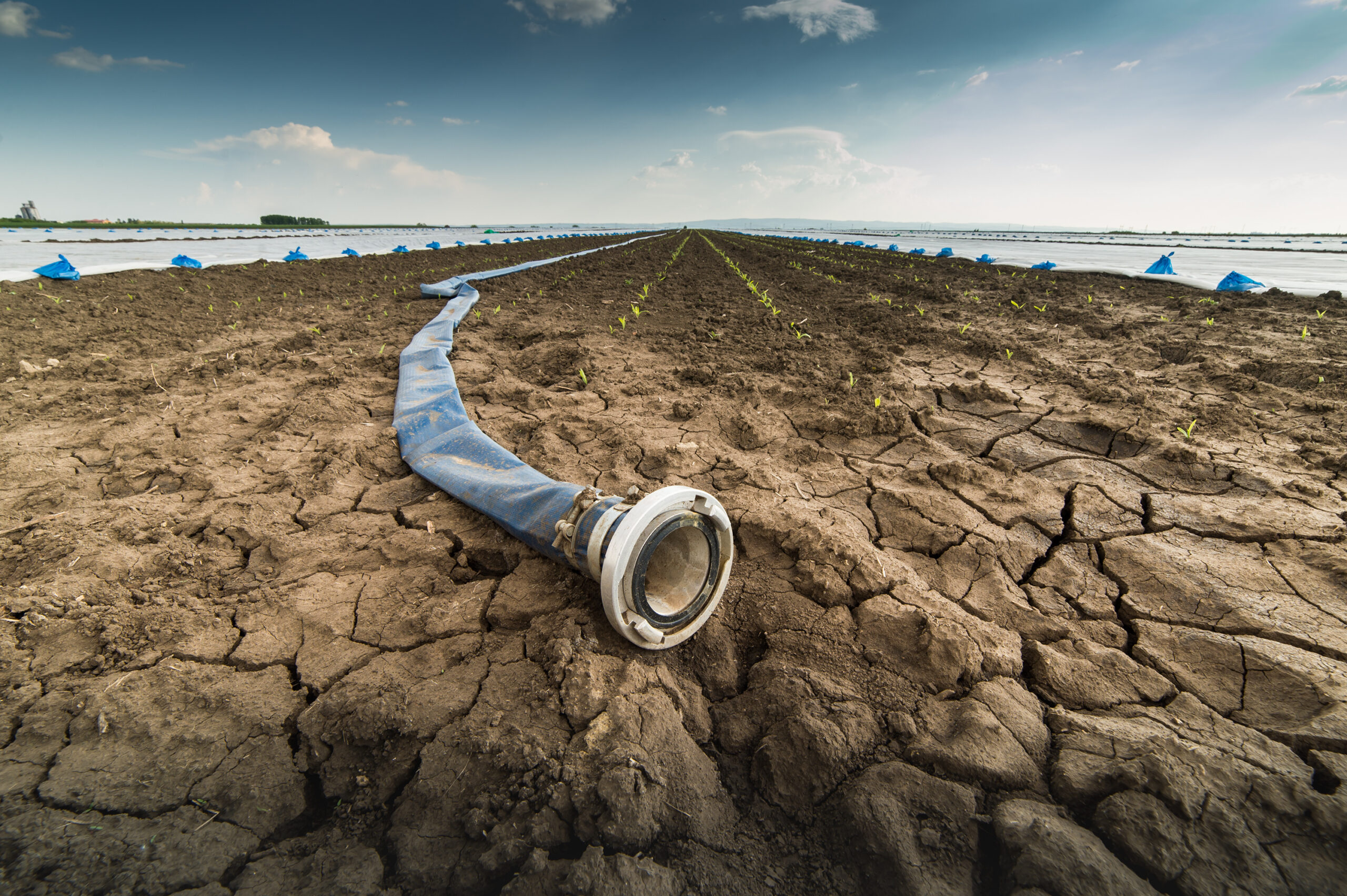 Very dry land - drought - and hose for watering
